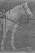 Riderless Palomino