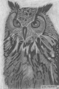 The Wisest Owl